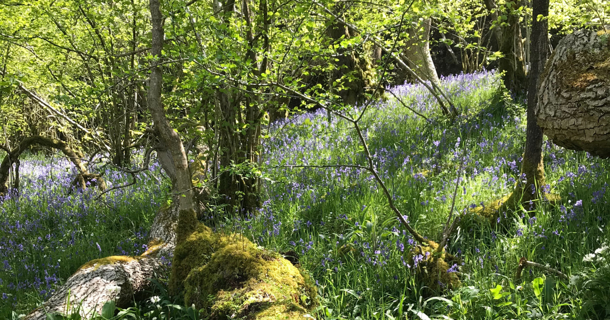 Forest Bathing – it's child's play